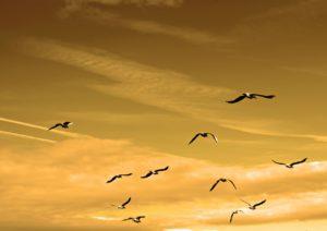 birds-sky-chase